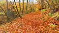 Витоша - Златна есен.JPG