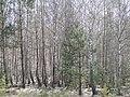Воронежская обл. Весенний день. - panoramio.jpg