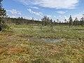 Воттоваара, болото в NE-части (2).jpg