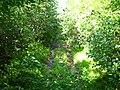 Здесь дорога такая узкая, что зелень смыкается над ней - panoramio.jpg
