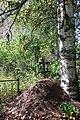 Никола-Бор могилы на погосте.jpg