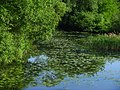 Плиса под зелёным покрывалом - panoramio.jpg