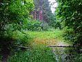 Посреди лесов - panoramio.jpg