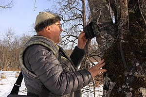 Remote camera - Professor A.N. Kudaktin examines remote camera for implementation of monitoring of wild animals within the Persian Leopard Reintroduction Program in the Caucasus.