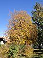 Разлог 2012 November - panoramio (45).jpg