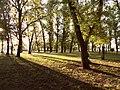 Ранок і Міському саду.jpg