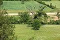 Стабло храста лужњака Стражев у Синошевићима крај Горњег Милановца, СП158.jpg