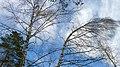 Чёрные молнии - panoramio.jpg