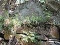Ոսկեպար, Ջուխտակ եղցի վանք 06.jpg