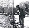 גן החיות של תל אביב צבי צלם וילי פולנדר 1954 ארכיון עיריית תל אביב.jpg