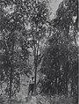 חולדה - אדם ביער.-JNF030521.jpeg