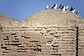 پرندگان کاروانسرای دیر گچین استان قم 14.jpg