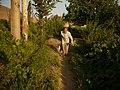 چهار باغ - panoramio.jpg