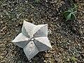 گلخانه کاکتوس دنیای خار در قم. کلکسیون انواع کاکتوس 03.jpg