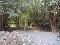 ચારનીયું આયુ નું મંદિર ફોટો રાજુ ઓડેદરા મો. . . . 07698787895 - panoramio.jpg