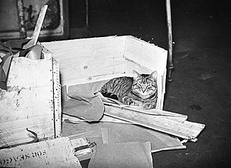 HMS Duke of York (17) - Whisky the ship's cat off duty