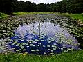 みそぎが池(御池) - panoramio.jpg