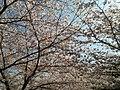 グランデュール鴨川前 - panoramio (2).jpg