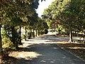 台場公園 - panoramio (7).jpg
