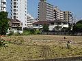 多摩市の都市化に飲まれる農業151003.JPG