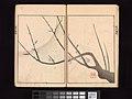 酒井抱一 画 『鶯邨画譜』-Ōson (Hōitsu) Picture Album (Ōson gafu) MET DP263372.jpg