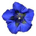 - Flower 15 -.jpg
