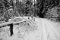 ...засніженими дорогами лісового заказника.jpg