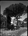04.08.1964. Vue de la propriété. (1964) - 53Fi4724.jpg