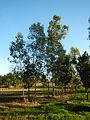 0581jfLandscapes Mabalas Diliman Salapungan Paddy fields San Rafael Bulacan Roadsfvf 16.JPG
