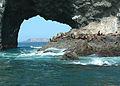 080806 steller sea lions orford reef odfw (14953346928).jpg
