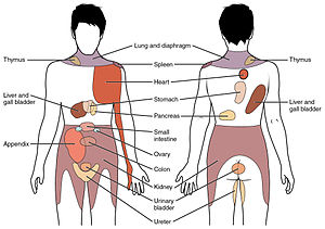 Referred pain - Conscious perception of visceral sensations map to specific regions of the body, as shown in this chart. Some sensations are felt locally, whereas others are perceived as affecting areas that are quite distant from the involved organ.