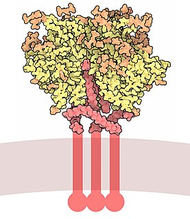 Envelope glycoprotein GP120 Glycoprotein exposed on the surface of the HIV virus