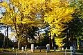 171103 Iwate University Morioka Iwate pref Japan01s3.jpg