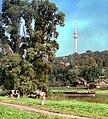 19861002500NR Dresden-OberWachwitz Fernsehturm.jpg