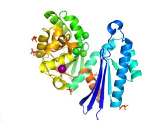 Exopolyphosphatase - Image: 1T6C PPX
