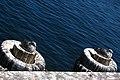 2006-08-15 - Road Trip - Day 23 - United States - California - Monterey - Seagulls 4889451368.jpg
