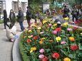 2008-02 HK Park Flowers Gerbera 1.JPG
