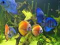 20080113 Aquatopia - Rivierenhof (049).jpg