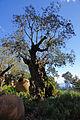 2011-03-05 03-13 Madeira 177 Monte, Jardim tropical Monte Palace.jpg
