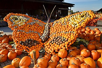 Jucker Farm - 2014 pumpkin festival