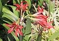 2014 Suchum, Ogród botaniczny (32).jpg