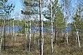 2015 42 Национальный парк Мещёрский - озеро Строганец.jpg