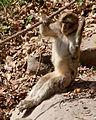 2016-04-21 15-04-16 montagne-des-singes.jpg