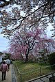 20160403 Himeji-Castle 3491 (26732476122).jpg