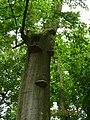 36304 Alsfeld, Germany - panoramio (9).jpg