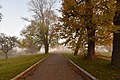 46-233-5004 Svirzh Trees RB 18.jpg
