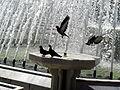 4718 Istanbul - Piccioni su fontana ad Eyüp - Foto G. Dall'Orto 30-5-2006.jpg