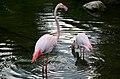 50 Jahre Knie's Kinderzoo - Flamingos 2012-10-03 16-48-31.JPG