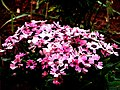 A@a my garden - panoramio (8).jpg