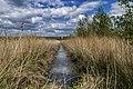 A Ditch, Tongplaat, Biesbosch, Dordrecht (34534306696).jpg